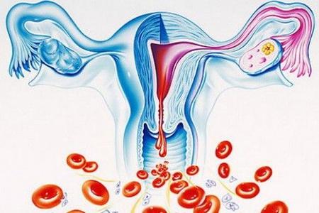 Схема репродуктивной системы женщины